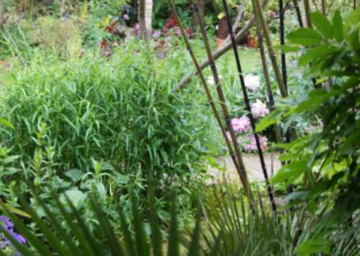 Exotic Planting Black Bamboo and Chusan Fan Palm
