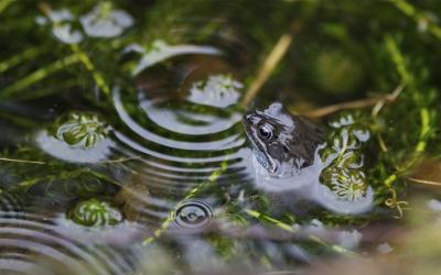 Spring Pond Life