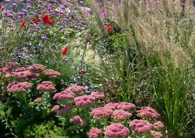 Sedums, Grasses and Verbena