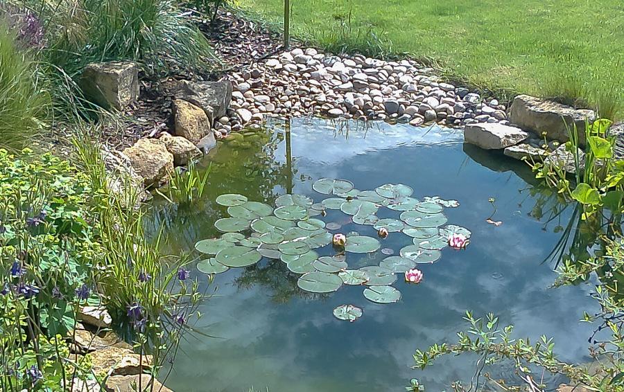 Ponds go wild landscapes for Garden pond images