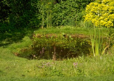Wildlife Pond with Wildflower Turf Surround