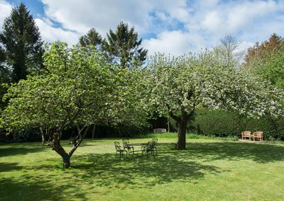 Apple Trees and Wildflowers