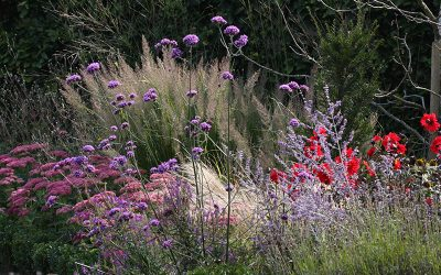 Planting Stunning Colour Combinations