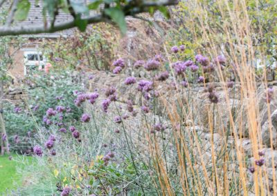 Verbena bonariensis and Molinia windspiel