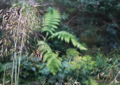 Oat Grass and Tree Ferns