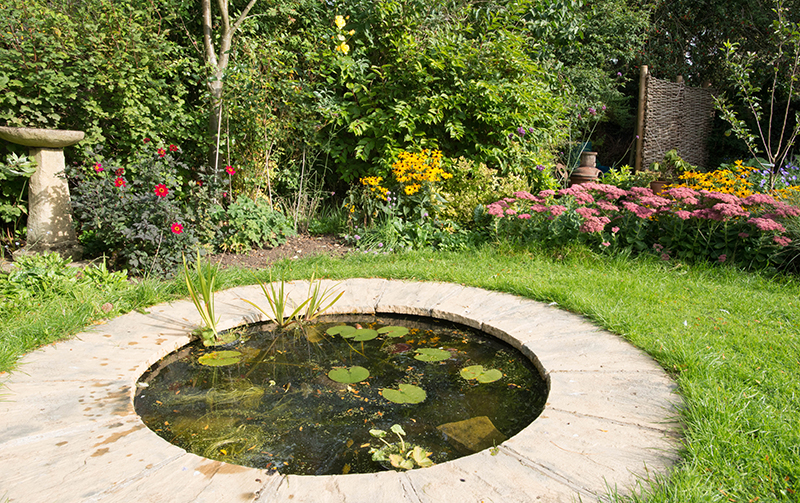A Wildlife Pond Creates a Focal Point